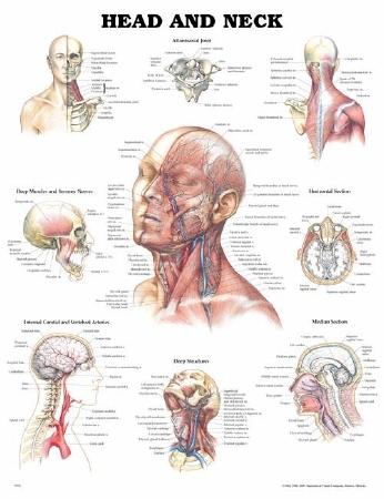 Anatomical Chart Company 9781587791475