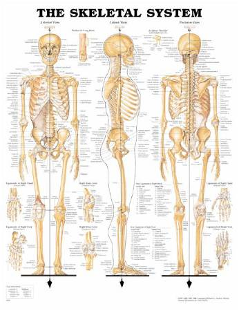 Anatomical Chart Company 1587790629 Mckesson Medical Surgical