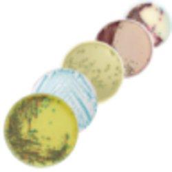 Biomerieux 419751