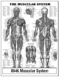 Anatomical Chart Company 9781587790355