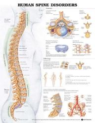 Anatomical Chart Company 9781587794438