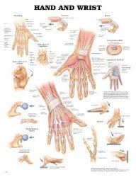 Anatomical Chart Company 9781587791420