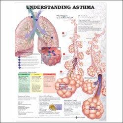 Anatomical Chart Company 9781587799389