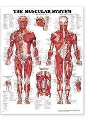Anatomical Chart Company 9781587790362