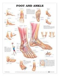 Anatomical Chart Company 9781587791383