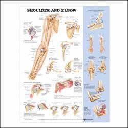 Anatomical Chart Company 9781587797552